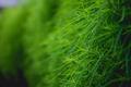 Green grass. Boke - PhotoDune Item for Sale