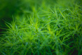 Green grass. Boke. Drops - PhotoDune Item for Sale