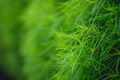 Green grass. Boke - PhotoDune Item for Sale