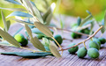Olives and branches on table - PhotoDune Item for Sale