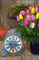 Tulip bouquet and old clock - PhotoDune Item for Sale