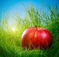 Apple on the grass - PhotoDune Item for Sale