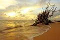 sunset dead tree in the sea at naiyang beach phuket thailand - PhotoDune Item for Sale