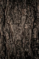 Tree texture - PhotoDune Item for Sale