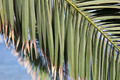 palm branch - PhotoDune Item for Sale
