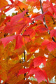 Multicolored and Spotted leaves on a tree - PhotoDune Item for Sale