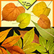Yellow-green Rounded Autumn-Graphicriver中文最全的素材分享平台