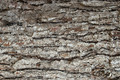Pine Bark Surfaces Texture Backgrounds, Texture 3 - PhotoDune Item for Sale