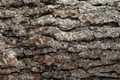 Pine Bark Surfaces Texture Backgrounds, Texture 4 - PhotoDune Item for Sale