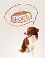 Cute border collie dreaming about food - PhotoDune Item for Sale