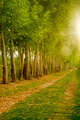 Farm Field Path Leads into Distance Along Tree Row Sunlight - PhotoDune Item for Sale