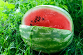 Ripe watermelon - PhotoDune Item for Sale