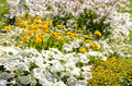 Yellow and white flowers in a garden - PhotoDune Item for Sale