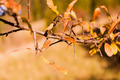 Twig Prunus Spinosa L. (Blackthorn, Sloe) - PhotoDune Item for Sale