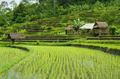 rice fields in bali indonesia - PhotoDune Item for Sale