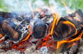 Closeup of a warm fire burning in a campfire - PhotoDune Item for Sale