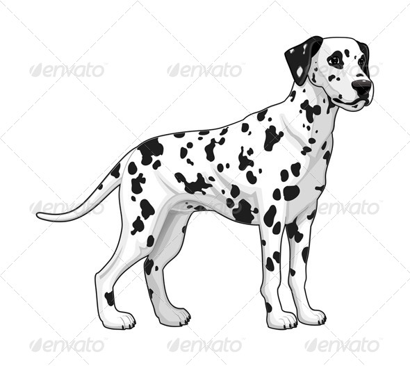 GraphicRiver Dalmatian 5922907