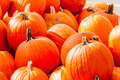 pumpkins on a pumpkin patch - PhotoDune Item for Sale