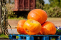 pumpkins on a pallet next to a fork lift - PhotoDune Item for Sale