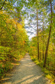 Beautiful autumn forest mountain stair path at sunset - PhotoDune Item for Sale