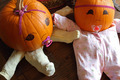 Pumpkin Babies from Above - PhotoDune Item for Sale