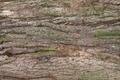 Bark Texture - PhotoDune Item for Sale