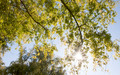 Sun light through tree tops in autumn. - PhotoDune Item for Sale