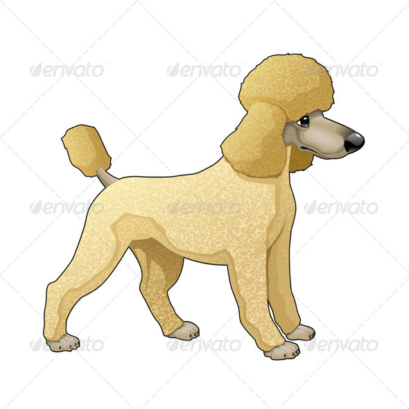 GraphicRiver Poodle 5947249