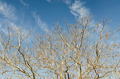 Dead Tree Branches - PhotoDune Item for Sale