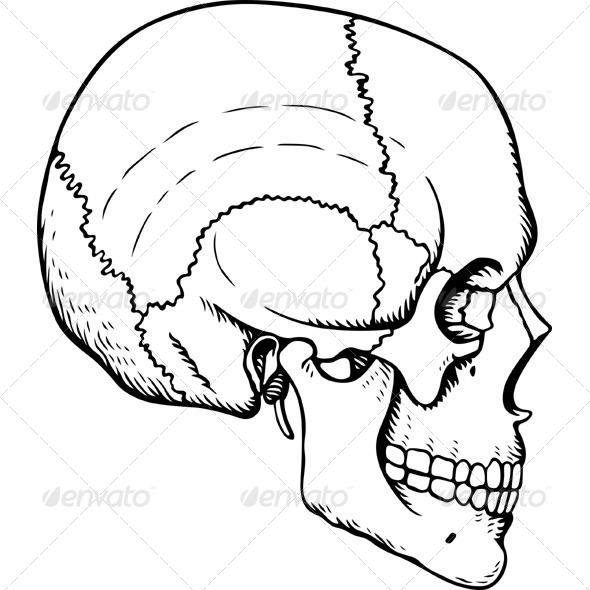GraphicRiver Human Skull 5967239