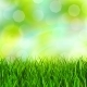 Grass Background - GraphicRiver Item for Sale