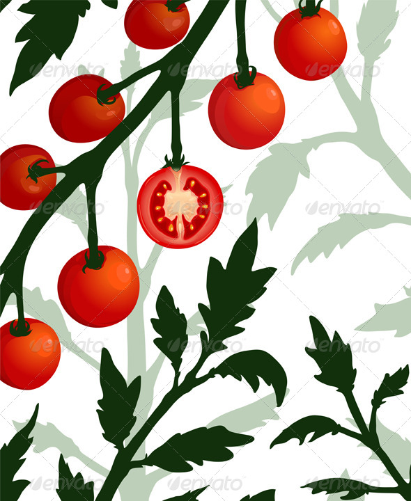GraphicRiver Botanical Tomato Branch with Sliced Section Plant 5976512