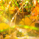 Sunny Autumn Background - VideoHive Item for Sale