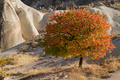 Autumn in Cappadocia - PhotoDune Item for Sale