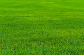 Green grass on the field - PhotoDune Item for Sale