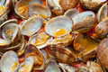 Clams in marinara sauce - PhotoDune Item for Sale