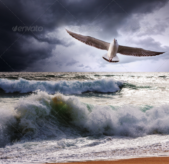 Sea gull - Stock Photo - Images