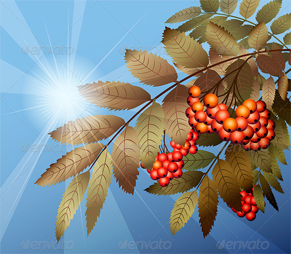GraphicRiver Mountain Ash 6023166