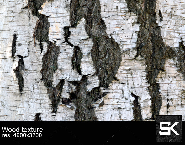 GraphicRiver Texture Of Birch Bark 6030343