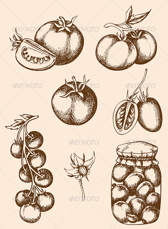 GraphicRiver Vintage Vector Tomatoes 6039618