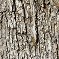 Wood Tree Bark Background Texture - PhotoDune Item for Sale