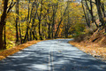 Empty Highway Through the Fall Forest - PhotoDune Item for Sale