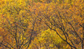 Yellow Fall Forest of Leaves - PhotoDune Item for Sale