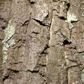 Wooden Tree Bark Background Texture - PhotoDune Item for Sale