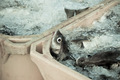 Catch of the day - Fresh Fish in Shipping Containers - PhotoDune Item for Sale