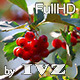 Wild Berries - VideoHive Item for Sale