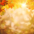 Abstract autumnal backgrounds for your design - PhotoDune Item for Sale