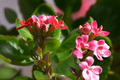 Flowers of Kalanchoe - PhotoDune Item for Sale