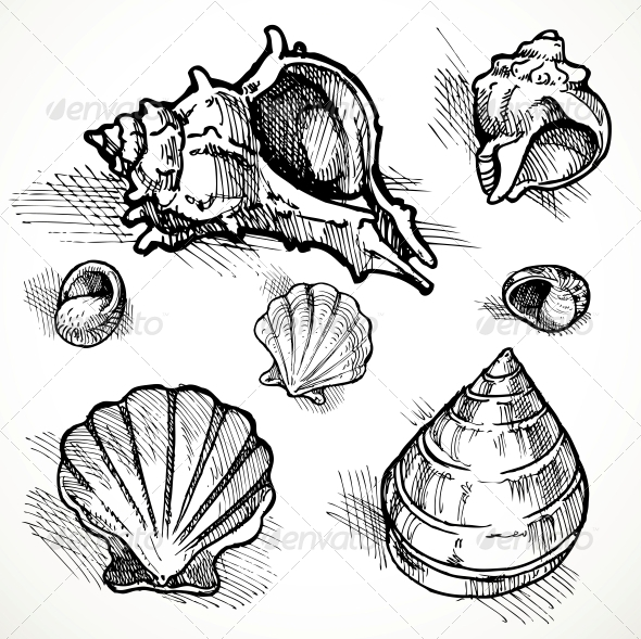 GraphicRiver Set of Shell Sketches 6058795