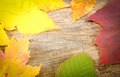 Colored Leaves Background - PhotoDune Item for Sale